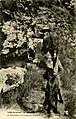 Saint-Moré--Le père Leuleu à la chasse aux serpents.jpg