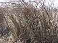 Salcioara - panoramio.jpg