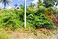 Samaná Province, Dominican Republic - panoramio (170).jpg