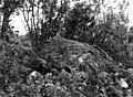 Samisk offerplass i Leivset, 1964 - Norsk folkemuseum - NF.09012-015.jpg