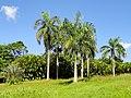 San Juan Botanical Garden - DSC06988.JPG