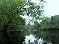 Santa Fe River, near river rise, in Oleno State Park, Florida.jpg