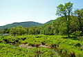 Schoharie Creek headwaters.jpg