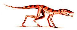 Scleromochlus BW.jpg