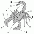 Scorpion anatomy.png