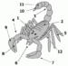 Scorpion anatomy: 1 = Prosoma; 2 = Mesosoma ; ...