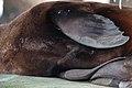 Seal (24384716285).jpg