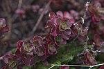 Secret gardens save AF money 160915-F-HB534-2020.jpg