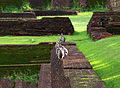 Semnopithecus priam - Sigiriya gardens.jpg