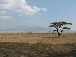 Serengeti - plains.jpg