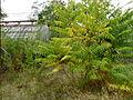 Serres abandonnées - Jardin Agronomique Tropical 4.JPG