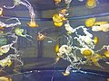Shark Reef Aquarium at Mandalay Bay - P1080575.jpg