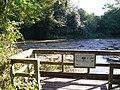 Sherbourne Pond - geograph.org.uk - 589120.jpg