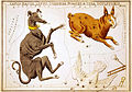 Sidney Hall, Canis Major, Lepus, Columba Noachi and Cela Sculptoris, 1825.jpg