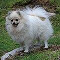 Sissy 26-8-08 500.jpg