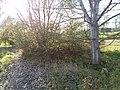 Slatiny - panoramio (1).jpg