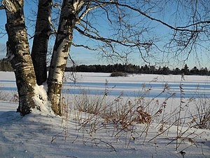 Seney National Wildlife Refuge Snowscape (6701322581).jpg