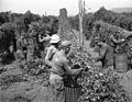 Soldiers picking hops (6427144905).jpg