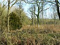 Somerford Common - geograph.org.uk - 1221805.jpg
