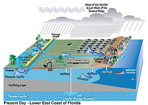 Color digital illustration of recent water drainage in South Florida, showing a significantly diminished Everglades replaced by homes and agriculture; some wells are dug into the Biscayne aquifer and a deeper one into the Floridan aquifer. Under the most developed portion of the coastline the Atlantic Ocean is intruding on the Biscayne aquifer