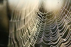 Spider's web (KK).jpg