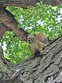 Squirrel - jets fan - panoramio.jpg