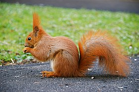 Squirrel by mareckr.jpg