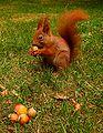 Squirrelwarsaw3.jpg