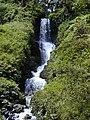 Starr-010715-0024-Hedychium coronarium-waterfall-Wahinepee-Maui (24506813026).jpg