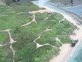 Starr-120406-4198-Hibiscus tiliaceus-aerial view and dunes-Spreckelsville-Maui (24511743043).jpg
