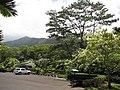 Starr-120522-6645-Ochroma pyramidale-habit and parking area-Iao Tropical Gardens of Maui-Maui (24513364214).jpg