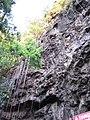 Starr-130319-3206-Clusia rosea-very long aerial roots-Waikanaloa Wet Cave-Kauai (25115605531).jpg