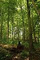 Steenbergse bossen 19.jpg