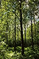 Steenbergse bossen 28.jpg