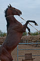 Studfarm in Turkmenistan - Flickr - Kerri-Jo (16).jpg