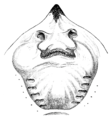Study of Fishes-Fig 1.png