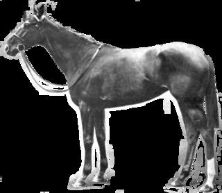 Sunny Jane (horse) British-bred Thoroughbred racehorse