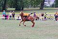 Swiss Pony Games 2011 - Finals - 116.JPG