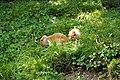 Switzerland-03664 - Lop-Eared Rabbits (23484097883).jpg