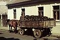 Szentendre 1975, lovaskocsi, brikett. Fortepan 77823.jpg
