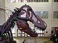 T-Rex (12859882484).jpg