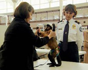 2006 in the United States - August 10: A United States TSA agent inspects a service monkey before a flight.