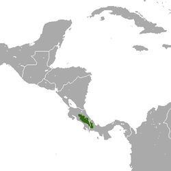 Talamancan Small-eared Shrew area.png