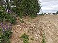 Tarandės senosios kapinės. Vaidos Jonušytės nuotr.jpg