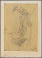 Tchitrea mutata - 1854 - Print - Iconographia Zoologica - Special Collections University of Amsterdam - UBA01 IZ16500053.tif