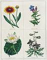 The Botanic Garden00.jpg