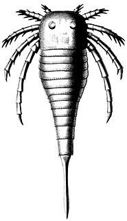 <i>Kokomopterus</i>