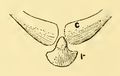 The Osteology of the Reptiles-138 iujhg kiujhb kjhb jhgv jhb juh kjh.png