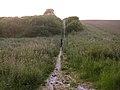 The Pilgrim's Trail on Twyford Down at dusk - geograph.org.uk - 25764.jpg