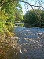The River Ayr - geograph.org.uk - 579012.jpg